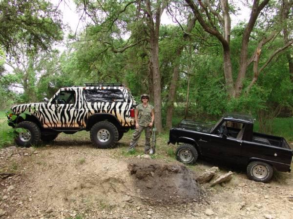 zebra & 66